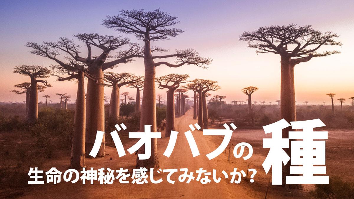 baobab-eye-catch
